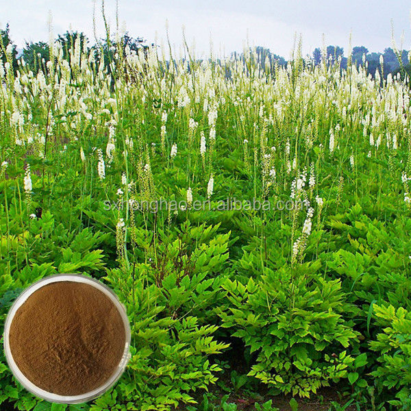 100% Natural pharmaceutical medicine 5% triterpene glycosides black cohosh extract powder