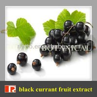 GMP standard factory supply Nature black currant fruit extract, Anthocyanidins 5%-25%