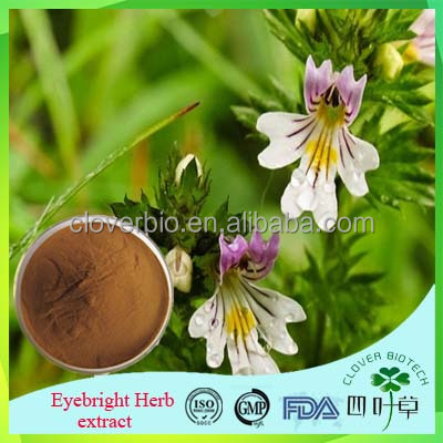 Tope quality Chinese herbal Medicine Eyebright extract, Eyebright P.E