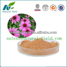 Top selling chicory acid 2% echinacea flower extract manufacturer