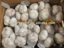 2014 cangshan red skin garlic for sale