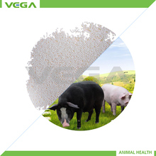 China largest manufacturer coated ascorbic acid animal feed grade coated Vitamin C 97 with bulk stock low price