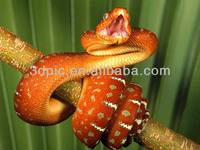 Amazing orange with dots snake 3d pictures