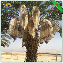 Date bag with UV, date palm protection mesh high quality plastic DATE BAG