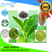 Manufacturer salesdecaffeinated green tea extract powder,green tea extract extract