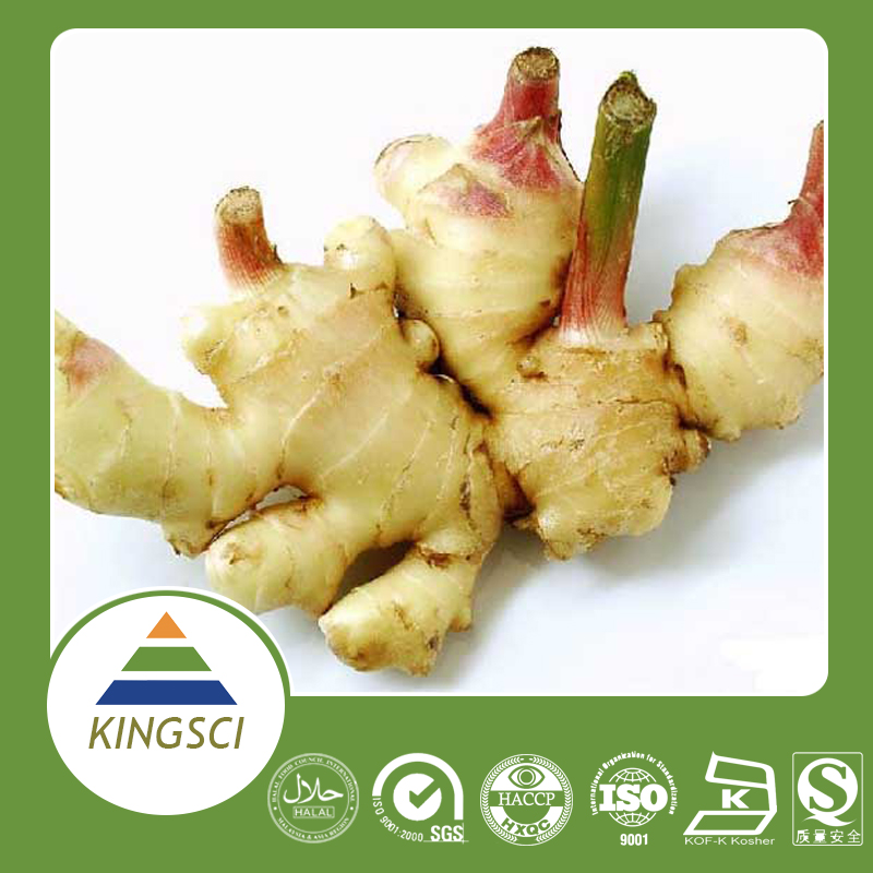 Supercritical Co2 Extract 100% Natural Ginger Gingerol