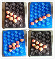 PP plastic serving tray