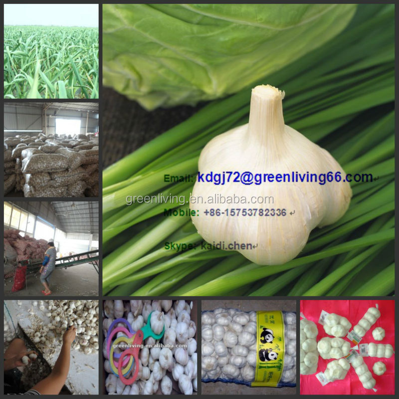 Fresh Garlic 2014 New Crop ,Shandong Jining Jinxiang garlic