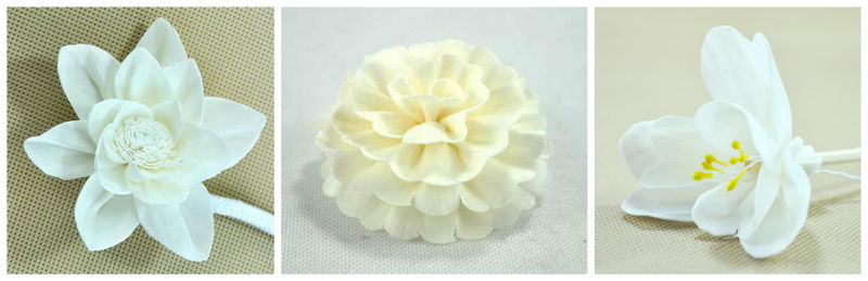 Natural Sola Flower / Aroma flower for Diffuser / Home decoration