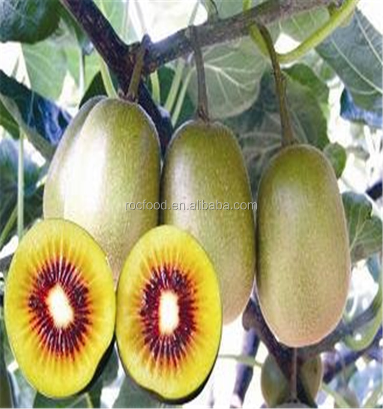 Grade A quality fresh kiwi fruit for sell in bulk