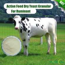High Purity Feed Grade Active Dry Yeast For Ruminant Specially