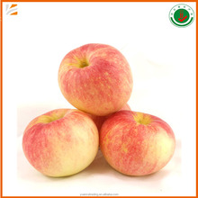 70#-90# size fresh red suger sweet gala apple fruit for export with best price