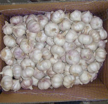 2017 new crop fresh garlic Chinese normal white garlic