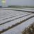 Wholsale UV Standard Polypropylene PP Spunbonded Nonwoven Agricultural Mulching Film