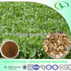 High quality natural Radix isatidis P.E. (GMP manufacturer)