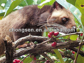 2014 New 100% INDONESIAN KOPI LUWAK COFFEE
