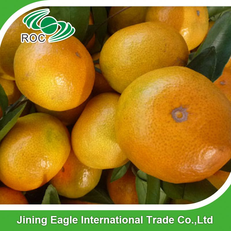 Nanfeng small sweet fresh mandarin orange in competitive price