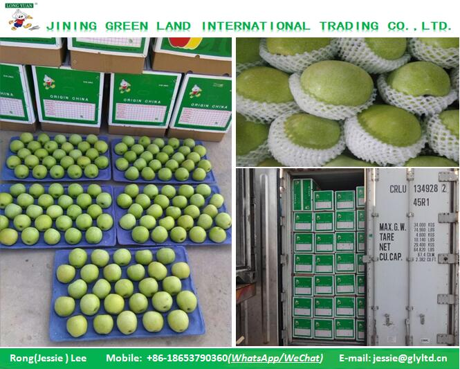 Fresh Green Apple from Chinese Import Export Company in good quality for sale