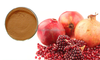 Top quality 100% nature Pomegranate extract powder / pomegranate seed powder with reasonable price on hot selling !!!