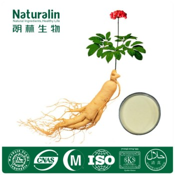 Natural Ginseng Extract Powder for Nourishing Brain
