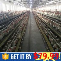 Design Pakistan Poultry Farm 3 or 4 layer for 90 96 120chicken birds for wholesales