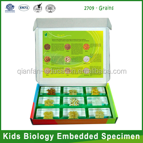 Qianfan Embedded Specimen Grains intelligence toys for preschool classroom