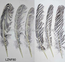 Printed Turkey feather Wing Quill pens LZNF80