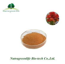 Water Soluble Rhodiola Rosea Powder Extract, Rhodiola Rosea Extract