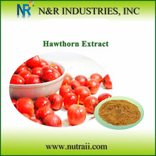 Hawthorn Fruit Extract Powder from Hawthorn Berry