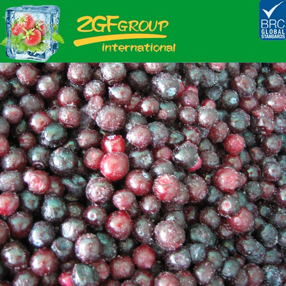 frozen IQF fruits Frozen Organic wild blueberries