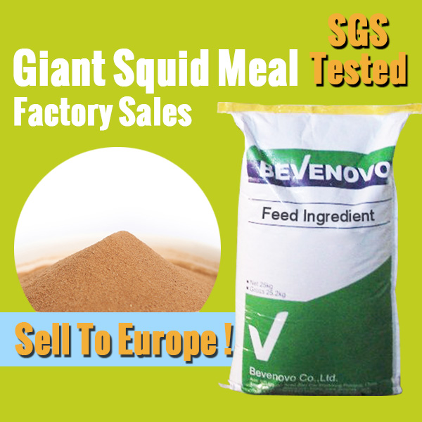 Supply Giant Squid Meal For Animal Feed Grade 45 Protein