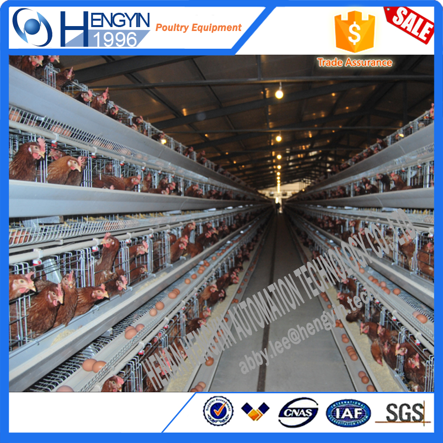China 20 years supplier customized farming equipment layer quail cages for sale