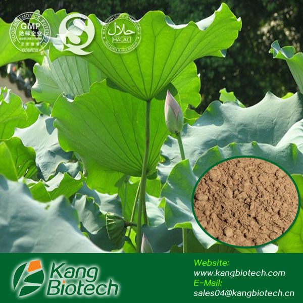 100% Natural Lotus Leaf Dry Extract