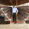 Free fittings sample poultry cage 3 tier or 4 tier with chicken cage