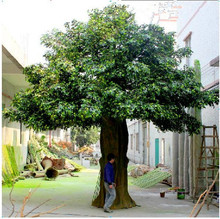 hot sale live ficus tree large outdoor artificial trees