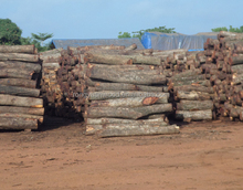 square logs/ hardwood timbers and lumber, Kosso, Mussivi, Manchurian Ash, Cedar wood, Basswood