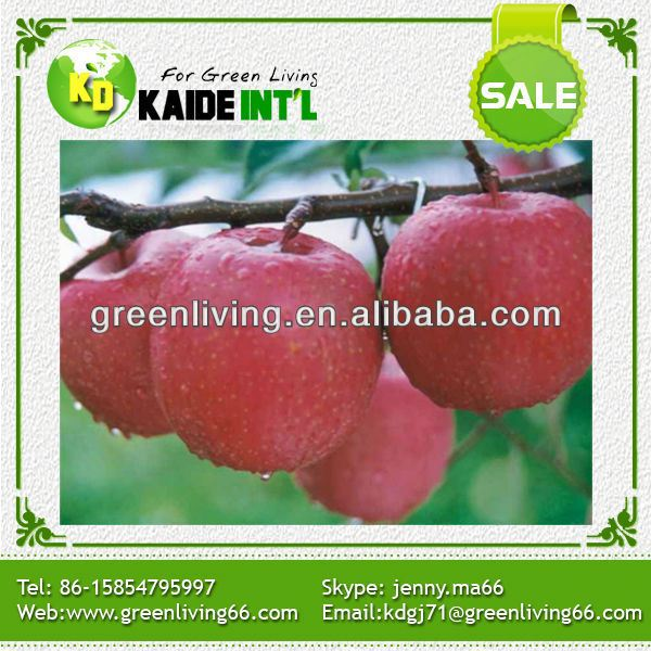 Pass Brc Wide Varieties Bulk Apple Fresh Fuji Apple Fruit Export Price