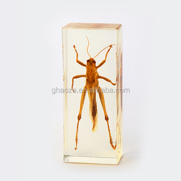 Clear Resin Insects Paperweight Insects In Resin Factory