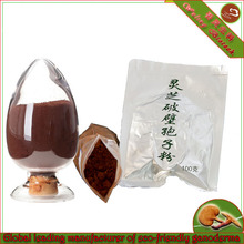 Healthy food high quality Reishi Mushroom extract -Shell-broken Reishi spore powder