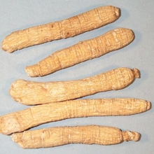 Xi Yang Shen Wholesale American Ginseng in Best Price