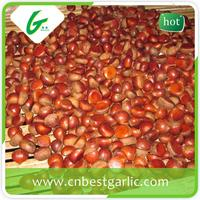 Organic raw fresh chinese bulk best price fresh chestnut
