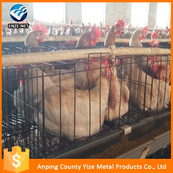 2016 hot sale uganda poultry farm automatic chicken layer cage