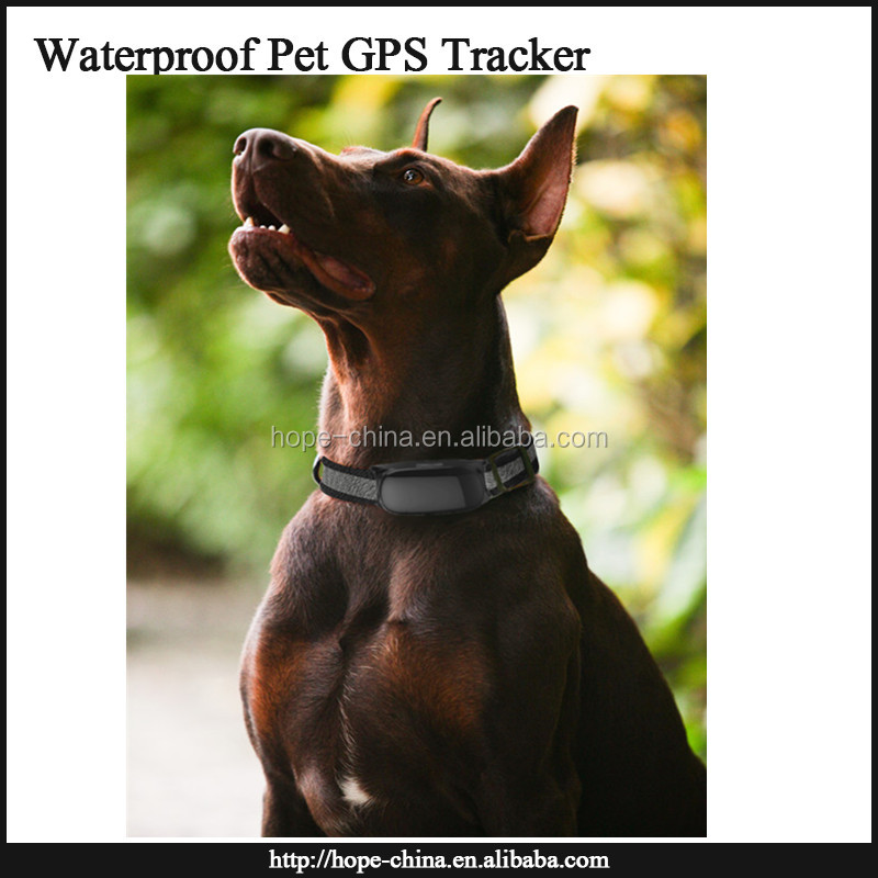 Real Time GSM/GPS Dog Collar Tracker Pets Hidden GPS tracker for med/Large Pet, Kid, Cat Dog with Collar