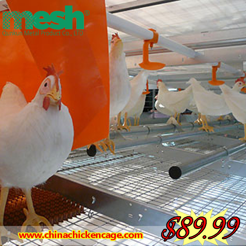 factory meat chicken poultry raising equipment