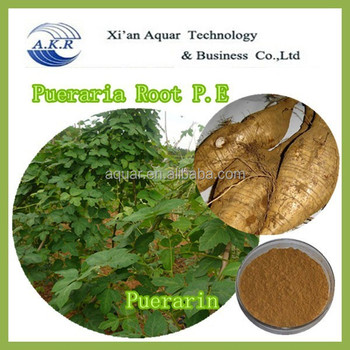 Root extract/P.E without synthesize ingredient 60% and free shiping