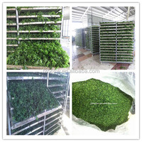 Japanese AO nori /Ulva/green seaweed, ulva powder for food industry
