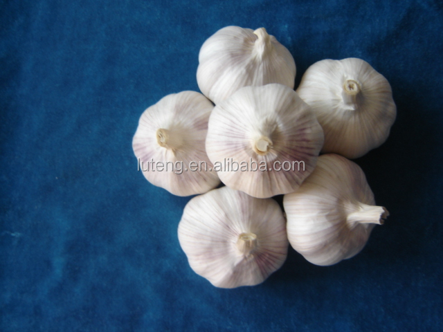 Good quality of garlic price in china 2014 for hot selling