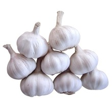 Organic Fresh Garlic