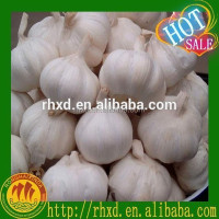 Jinxiang Fresh Natural Wholesale Garlic