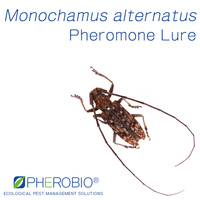 Monochamus alternatus Dual Attractant, Janpanese Pine Sawyer Pheromone Lure & Attractant